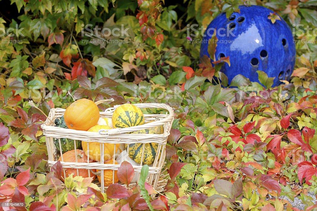Pumpkin and wild wine royalty-free stock photo