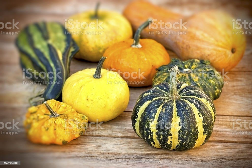 Pumpkin (guard, sqash) - autumn harvest stock photo