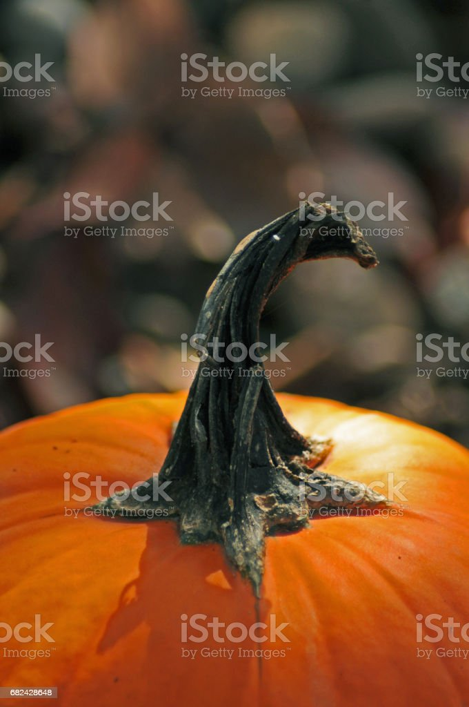 Pumpkin autumn new york royalty-free stock photo