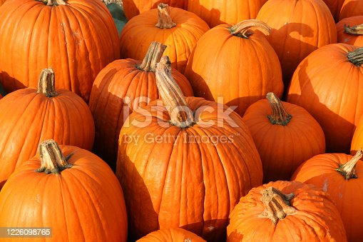 Pumpkin background with Cougar pumpkins - Schnitzkürbis