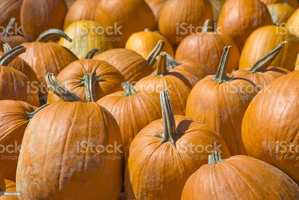 Pumpkin Background royalty-free stock photo