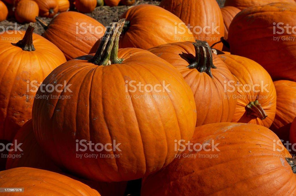 Pumpkin close up #2 stock photo