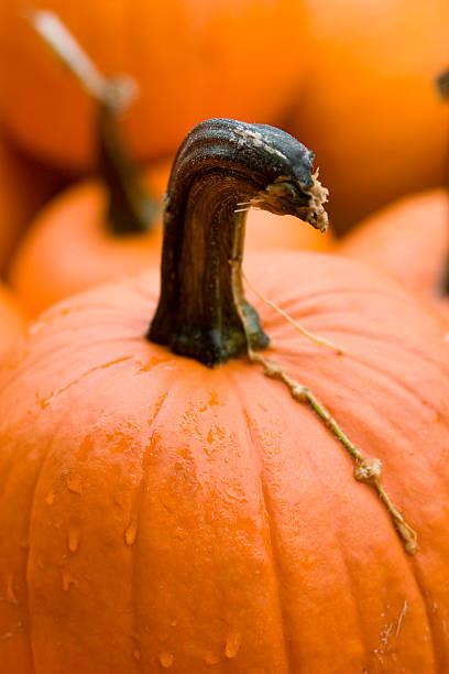 Pumpkin closeup stock photo