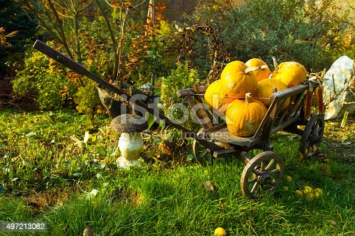 Few pumpkins in a small wooden cart in the backyard.