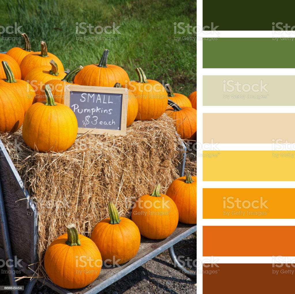 Pumpkin display palette stock photo