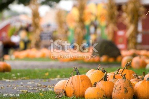 A depth of field image of a pumpkin farm during an autumn festival.