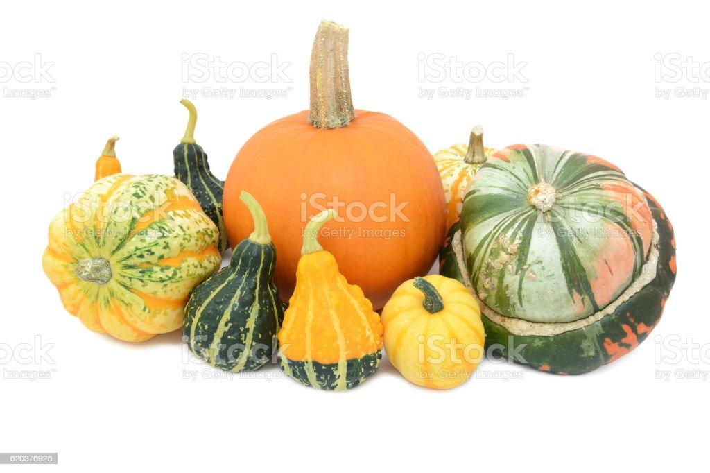 Pumpkin, Festival squash, Turks turban and ornamental gourds zbiór zdjęć royalty-free