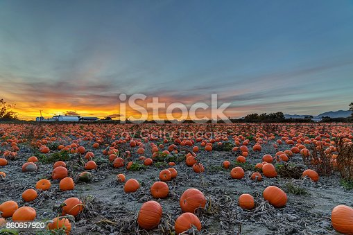 620705960istockphoto Pumpkin field at sunset 860657920