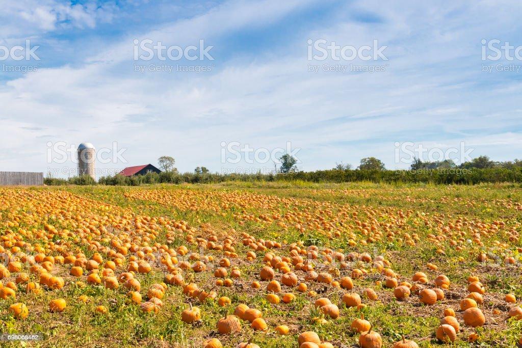 Kürbis-Feld in einem Land-Bauernhof – Foto