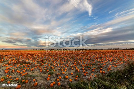 620705960istockphoto Pumpkin field view 875496946