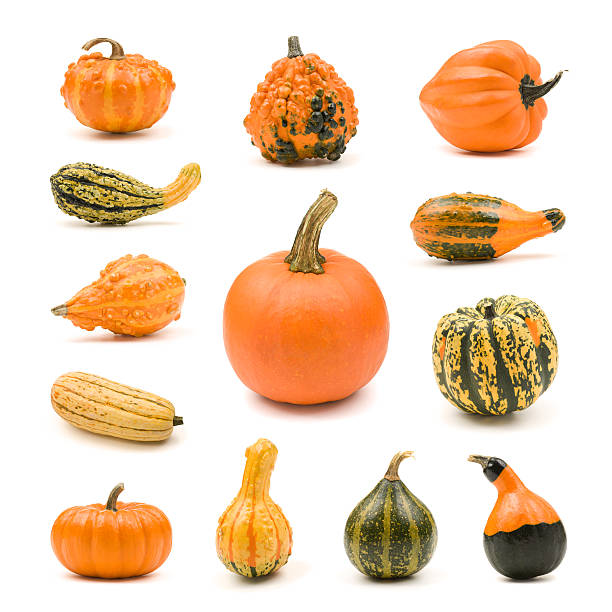 pumpkin, gourd and squash collection - gourd stock photos and pictures