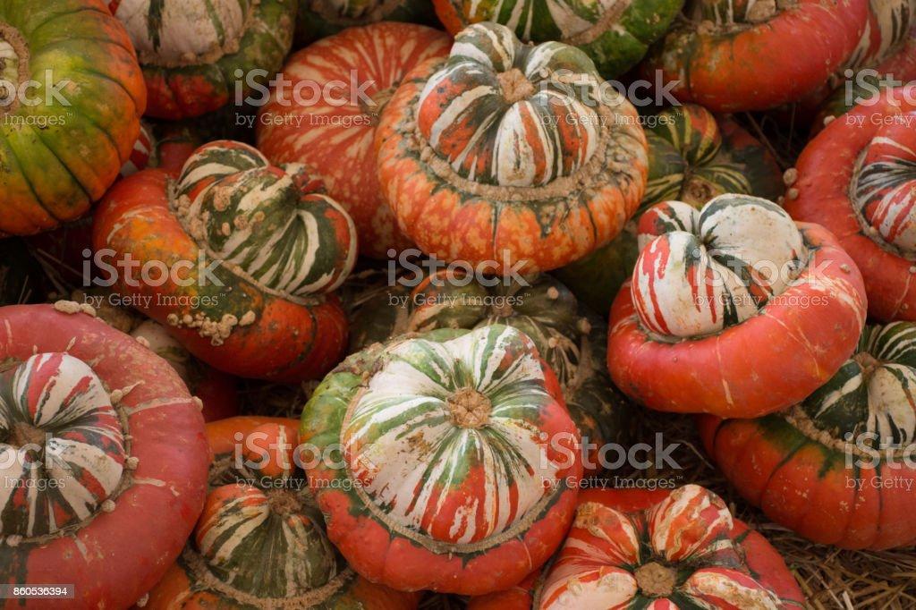 Pumpkin Gourds Squash stock photo