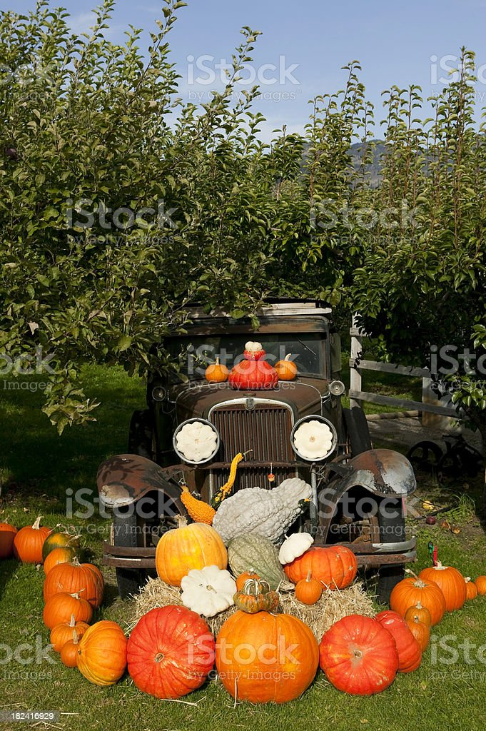 pumpkin halloween thanksgiving okanagan valley british columbia royalty-free stock photo