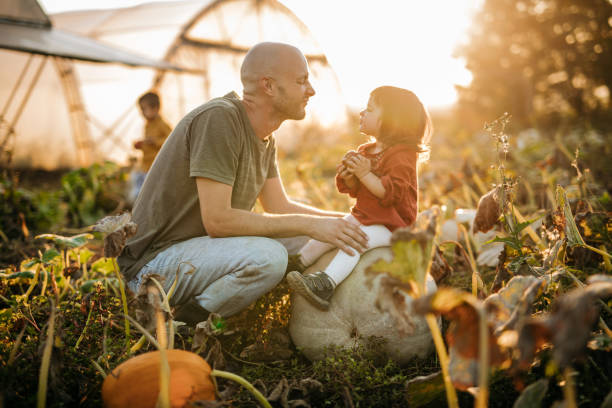 pumpkin harvest in autumn - living a sustainable lifestyle stock pictures, royalty-free photos & images