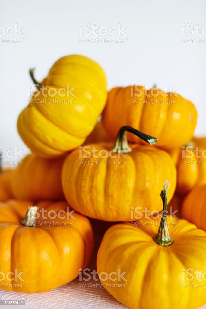 Pumpkin harvest on white stock photo