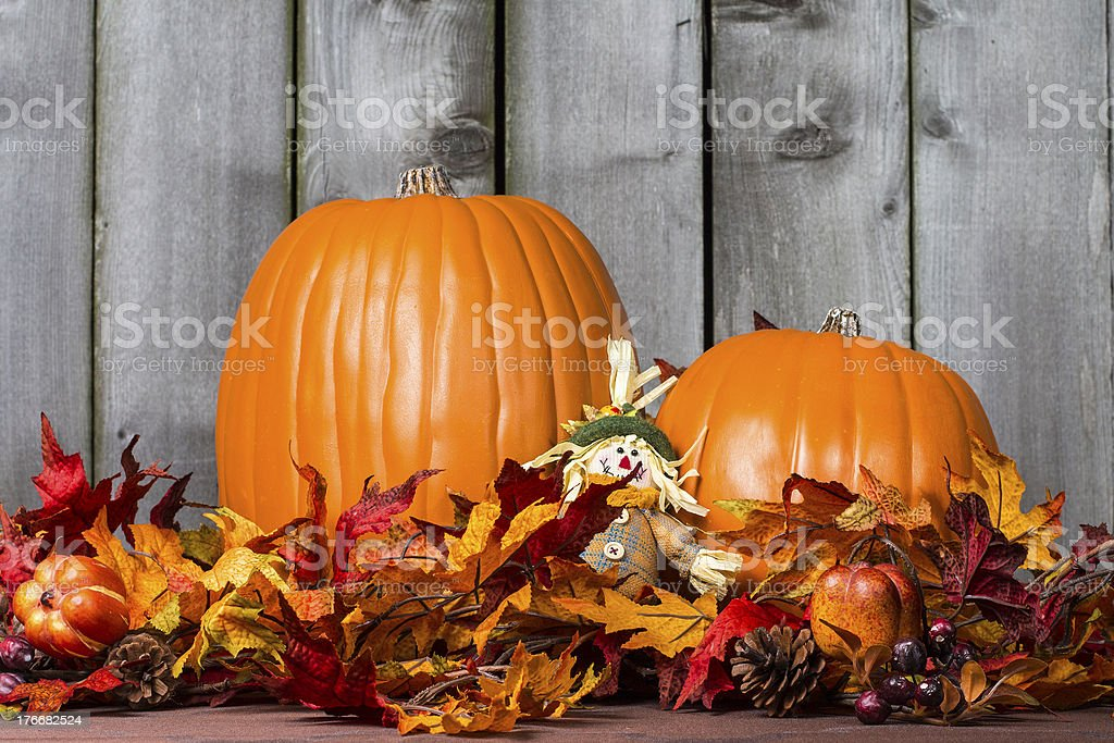 Pumpkin Harvest royalty-free stock photo