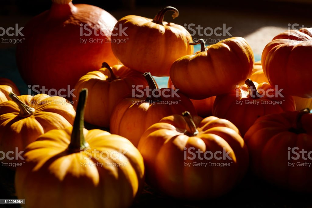 Pumpkin harvest stock photo
