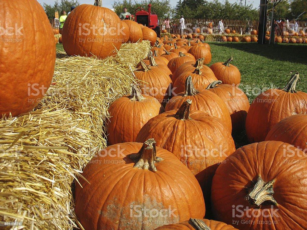 Pumpkin Harvest royalty-free stock photo