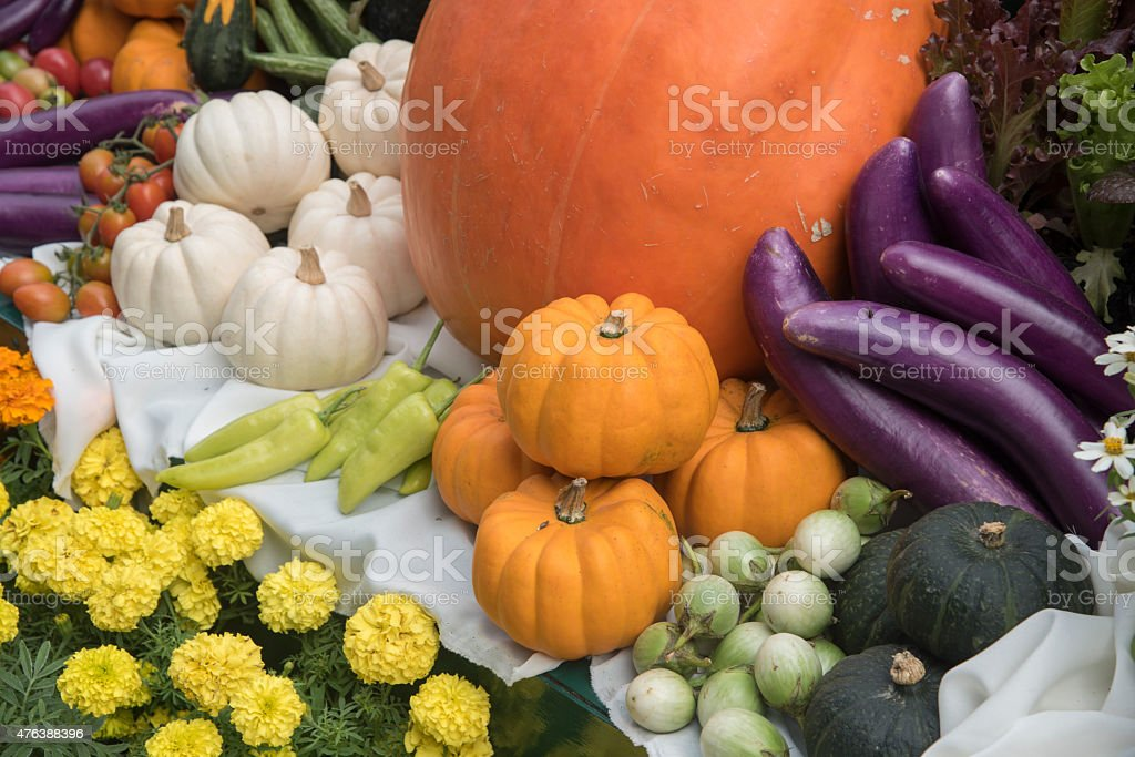 Pumpkin in various shapes and colors. stock photo