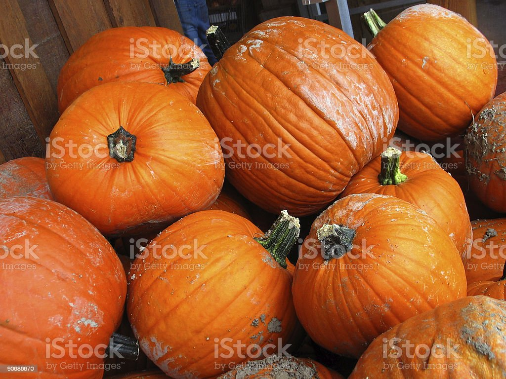 Pumpkin Mania stock photo