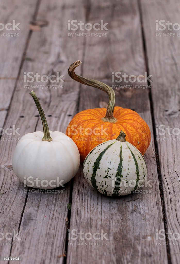 Pumpkin mix stock photo