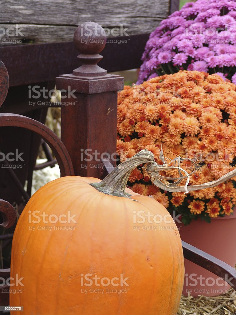 Pumpkin on a bench royalty-free stock photo