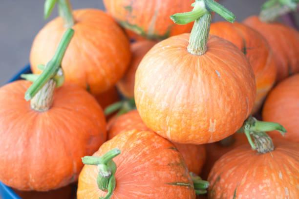 pumpkin orange isoliert auf weißem hintergrund. - hokkaido kürbis zubereiten stock-fotos und bilder