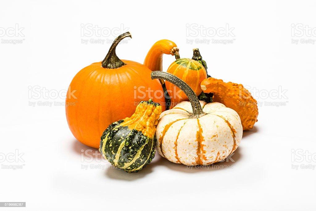 Pumpkin, Ornamental & Summer Crookneck gourds on a white background. stock photo
