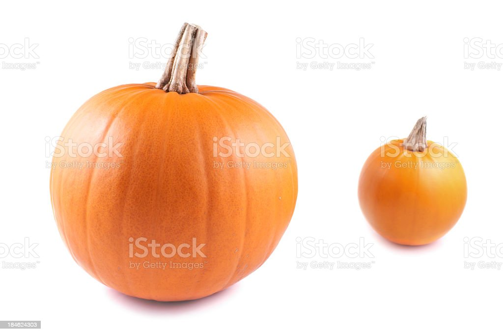 Pumpkin, oval on a white background royalty-free stock photo