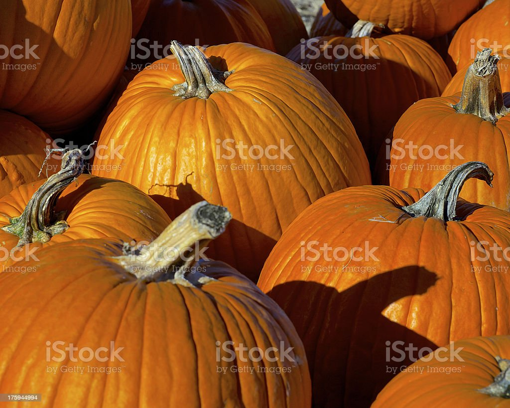 Pumpkin Patch at harvest time stock photo