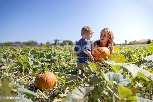A young boy having fun at the Pumpkin patch and getting ready for Halloween.