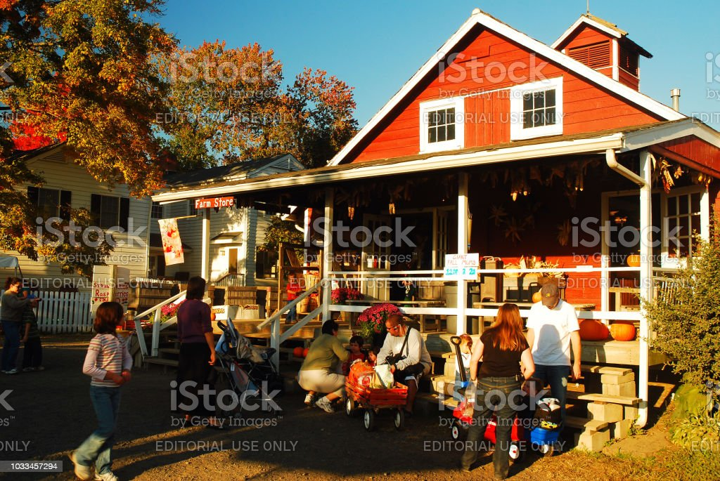 Pumpkin picking - foto stock