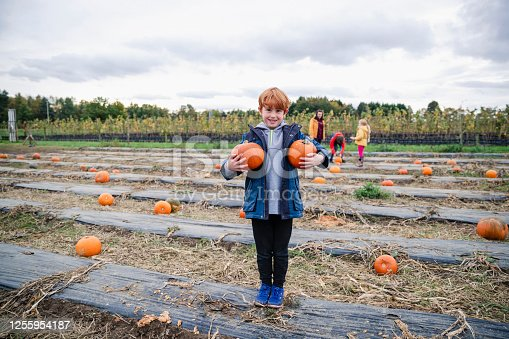 Young boy pumpkin picking at a farm in Autumn dressed in warm clothes getting ready for halloween. He is holding pumpkins and looking at the camera.