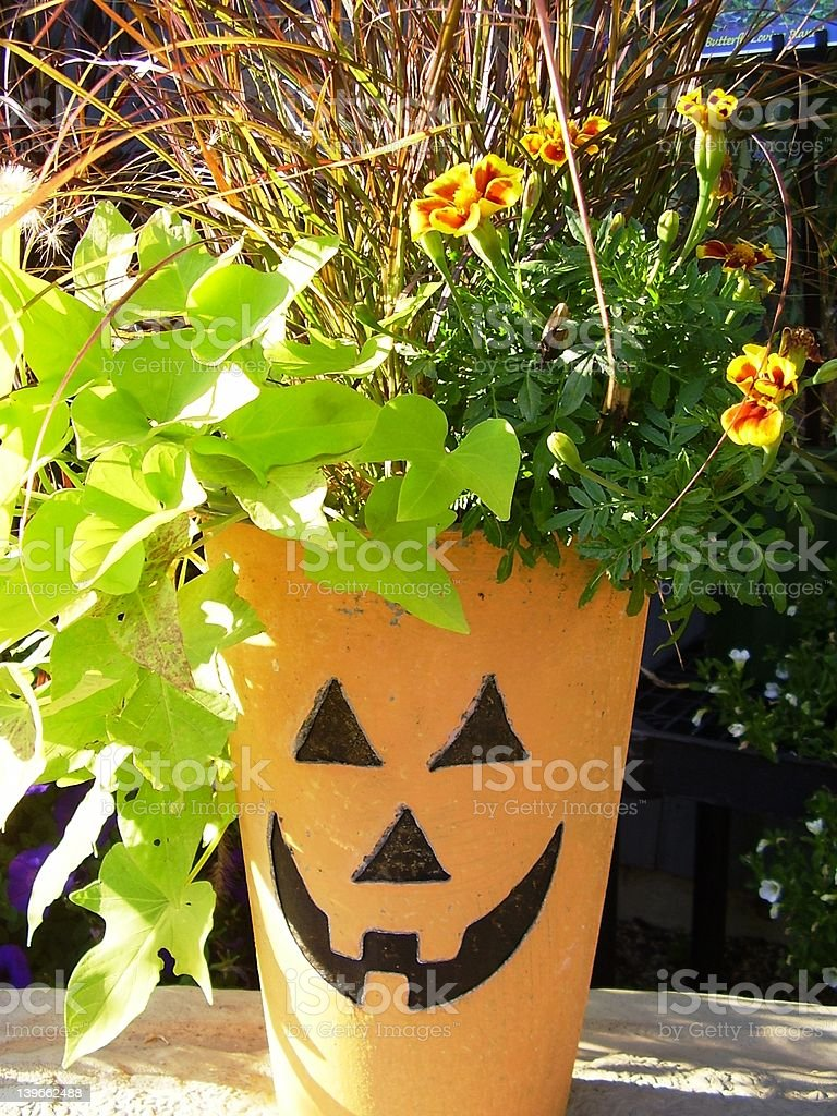 Pumpkin Planter royalty-free stock photo