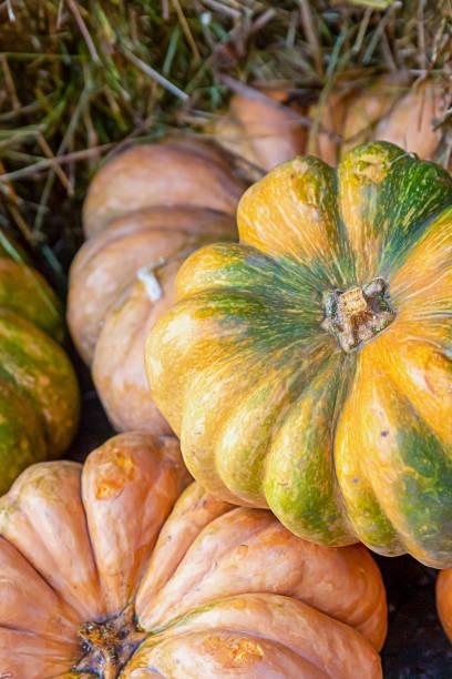 pumpkin ripe set of vegetables yellow and green, orange closeup lies on a straw background - pumpkin pie стоковые фото и изображения