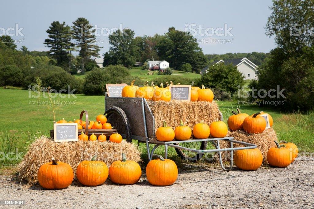 Pumpkin sale stock photo