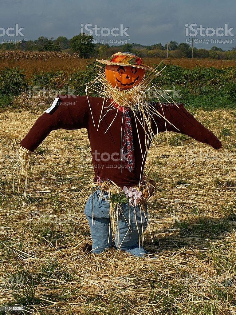 Pumpkin Scarecrow stock photo