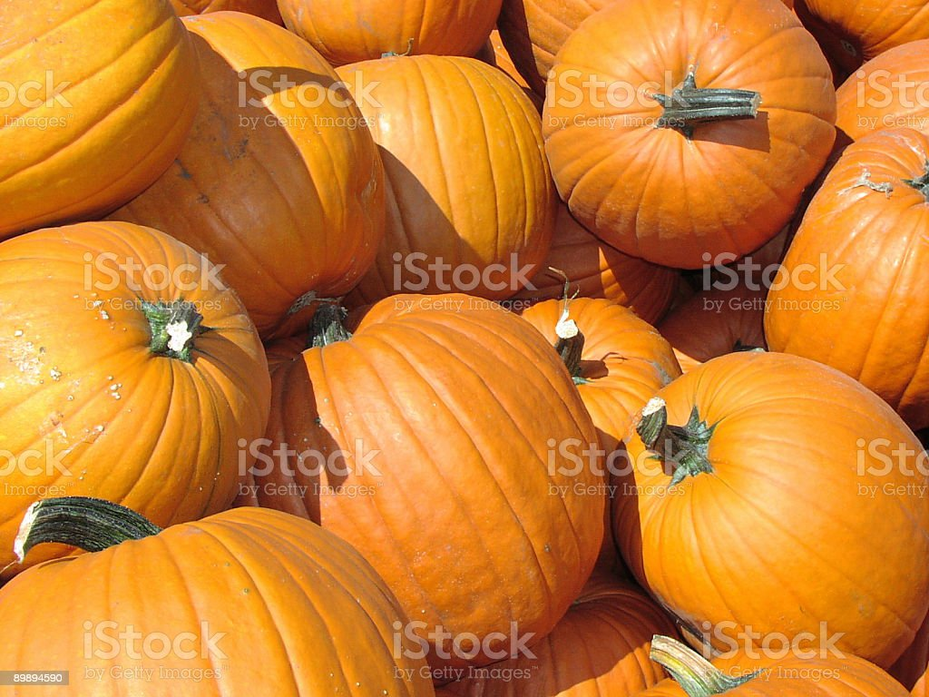 Pumpkin Series royalty-free stock photo