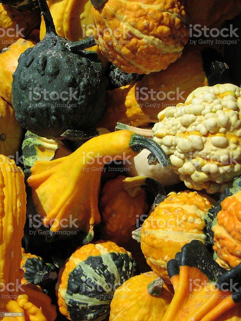 Pumpkin Series royalty-free stock photo