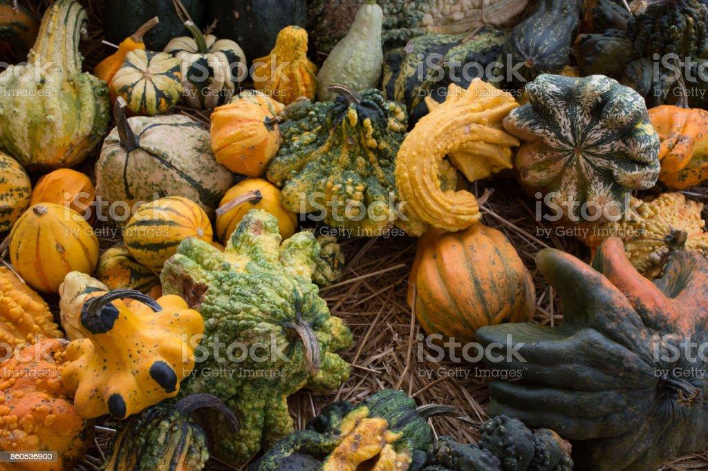 Pumpkin, Squash, and Gourds stock photo