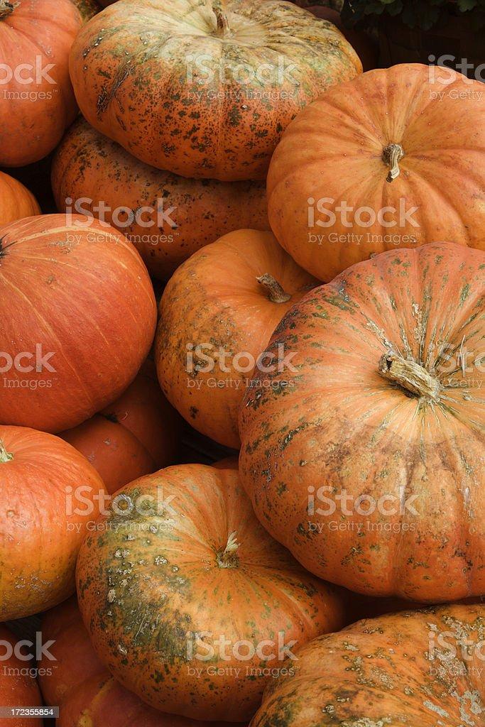 Pumpkin Squash Display Vt royalty-free stock photo