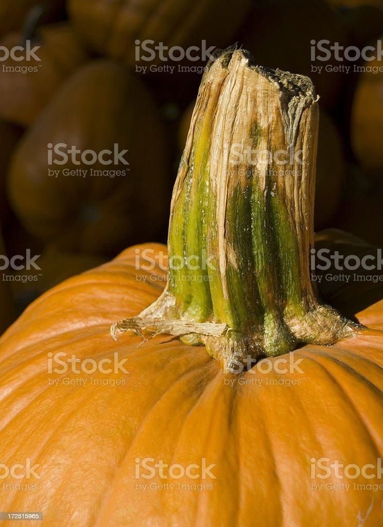 Pumpkin stem royalty-free stock photo