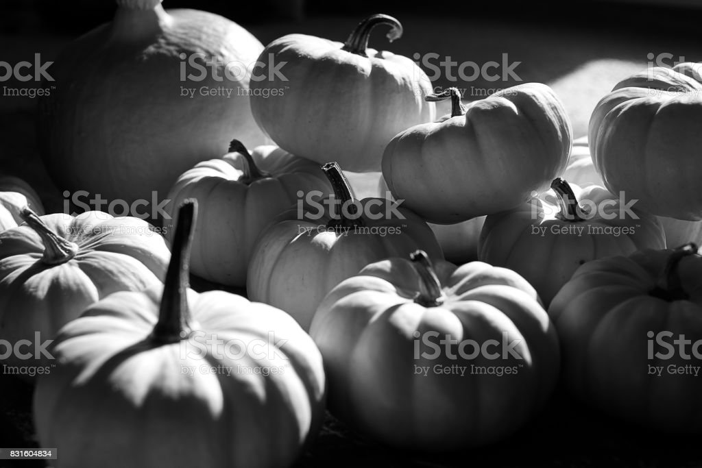 Pumpkin themed background stock photo