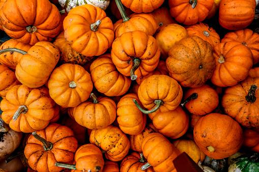 box of pumpkins.