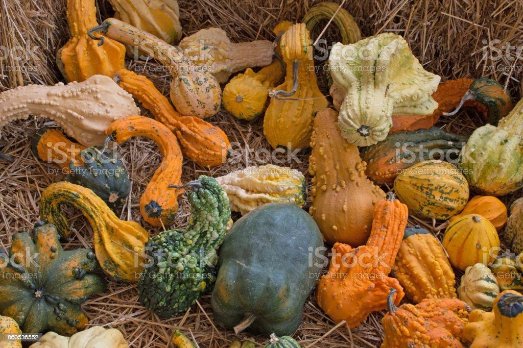 Pumpkin Varities stock photo