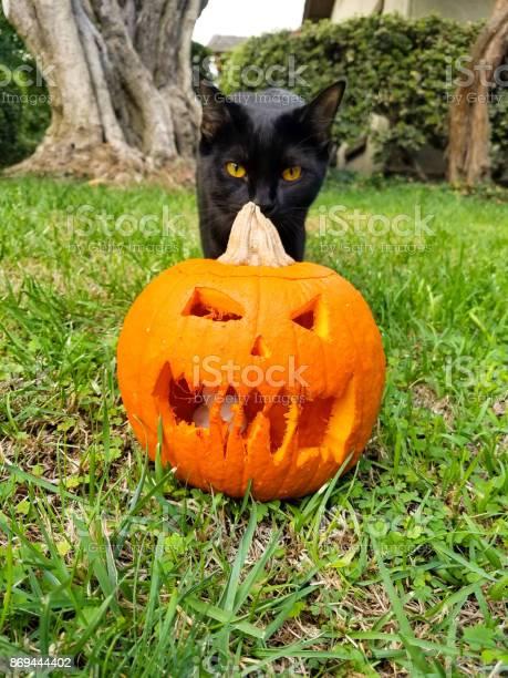 Pumpkin with black cat picture id869444402?b=1&k=6&m=869444402&s=612x612&h=2cujlmsl1mtzruek4z8qw3ba4aak1zv2pdybfisvtds=
