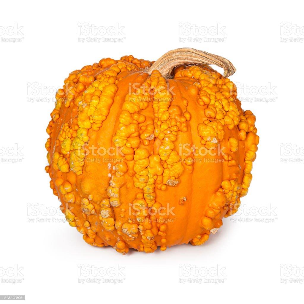 Pumpkin With Warts stock photo