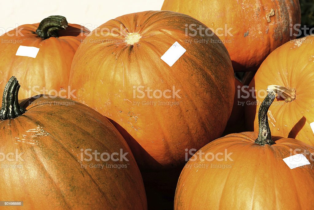 pumpkin01 royalty-free stock photo