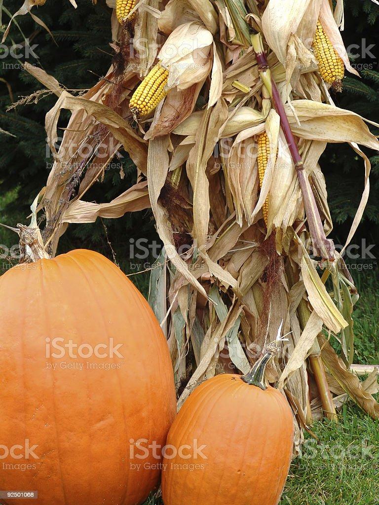 Pumpkins and Corn royalty-free stock photo
