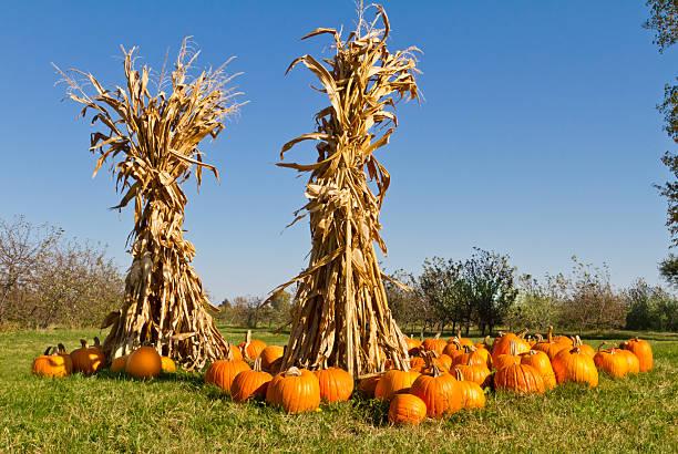 Pumpkins and corn stalks at farmers market stock photo